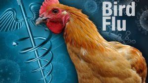 bird+flu+640